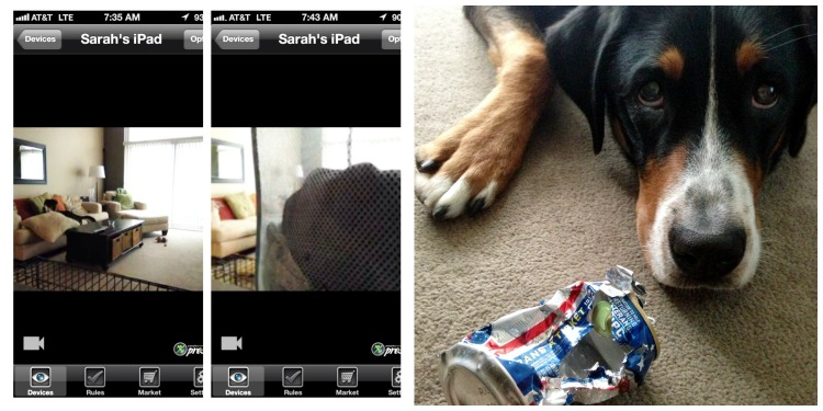 greater swiss mountain dog beer can simply social blog
