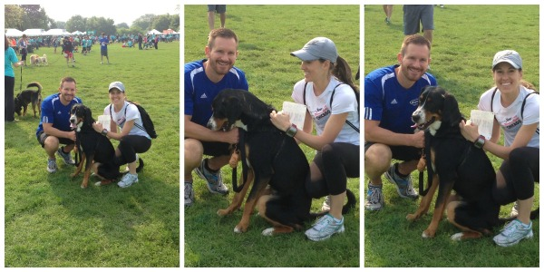 paws chicago run for their lives swiss mountain dog