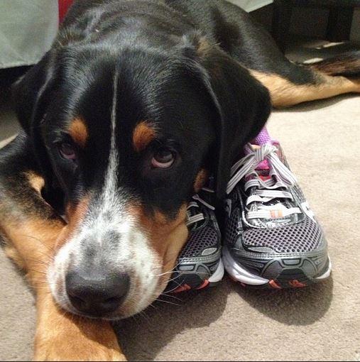 swiss mountain dog saucony ride running shoe