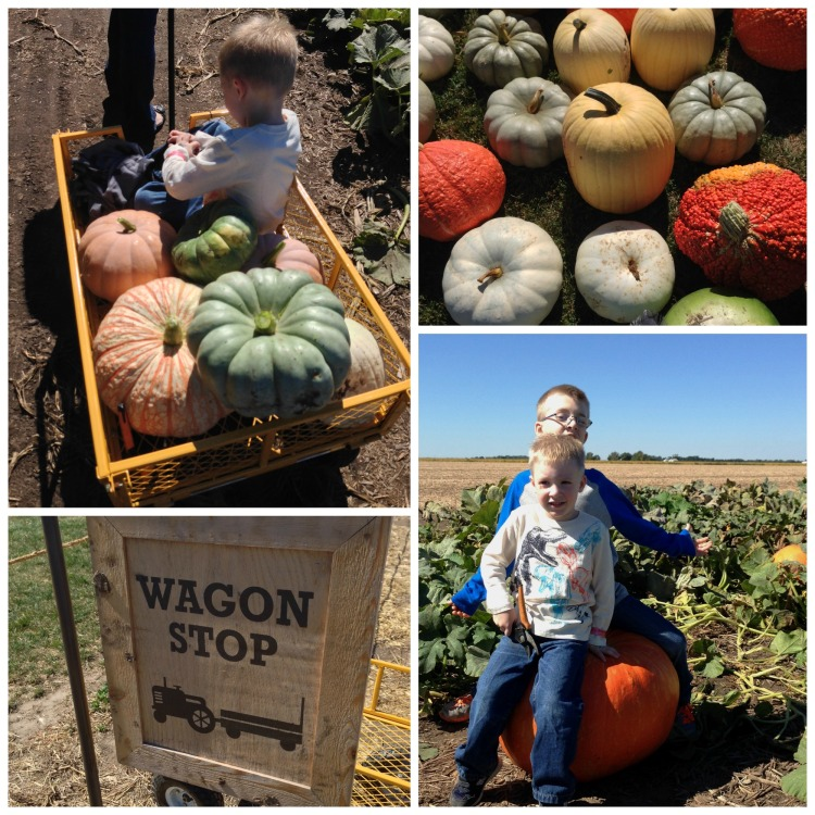 bomke's patch, pumpkin, wagons, simply social blog