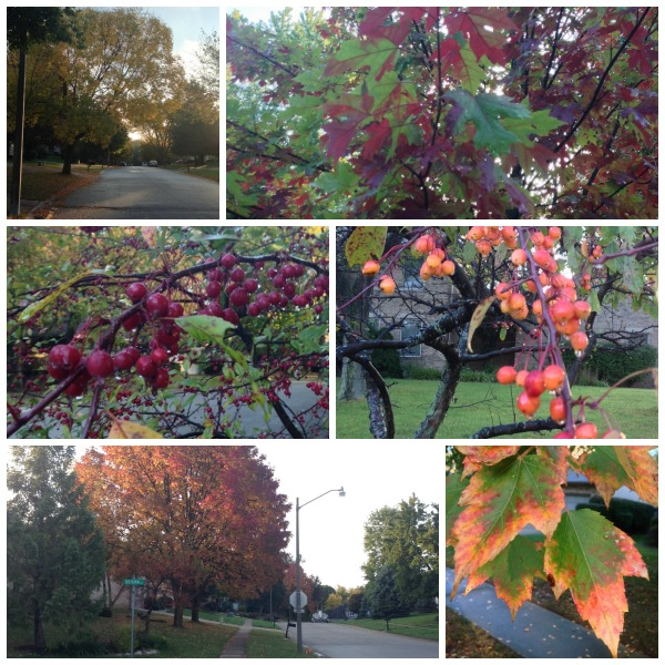 autumn fall changing leaves springfield illinois simply social blog