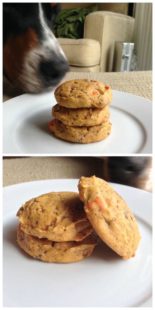 pumpkin toffee chocolate chip cookies, simply social blog, swiss mountain dog photobomb