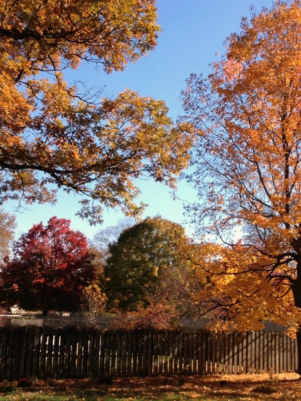 fall colors, springfield illinois, simply social blog