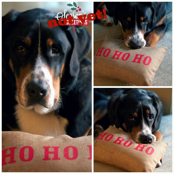 greater swiss mountain dog, holiday pillow, Target holiday pillow, swissy