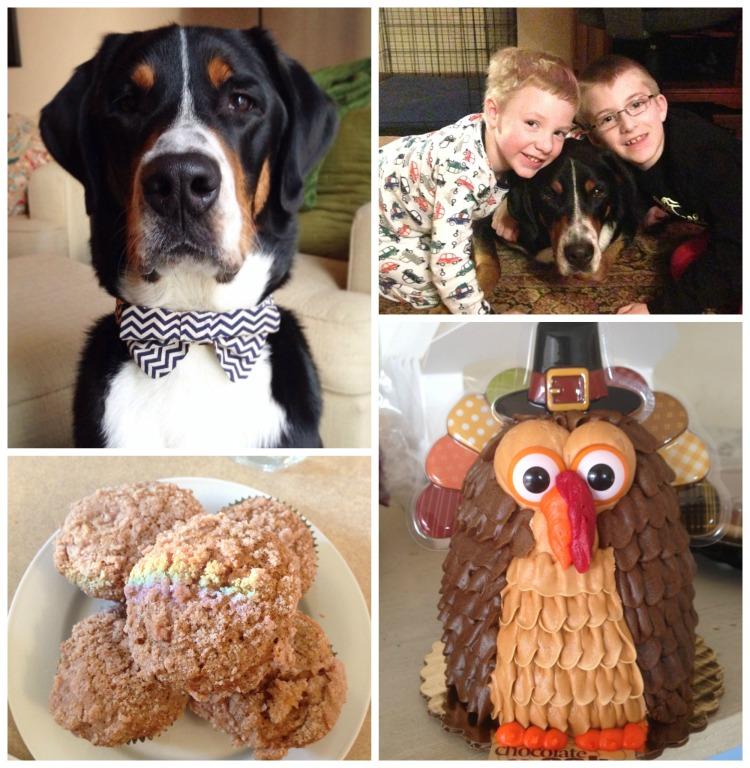 turkey cake, thanksgiving, swiss mountain dog, rainbow pumpkin muffins
