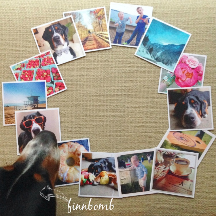 social print studio instagram prints, greater swiss mountain dog photobomb, simply social blog