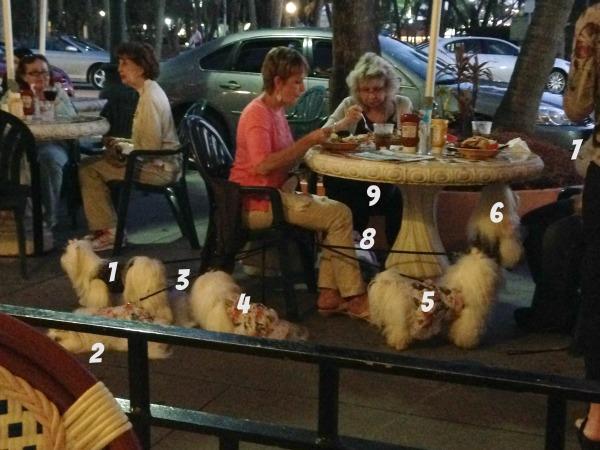 9 puppies dining, simply social blog