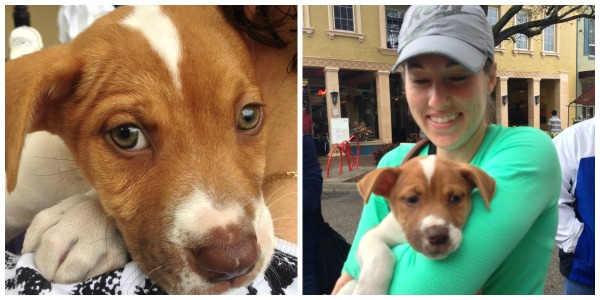 puppy adoption bradenton downtown farmers market