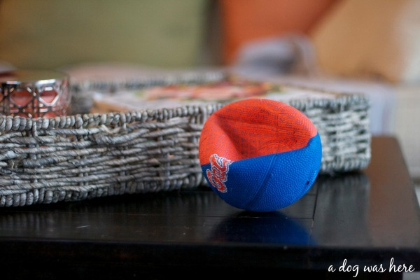 a dog was here photography series, dog toys on coffee table, photography, greater swiss mountain dog