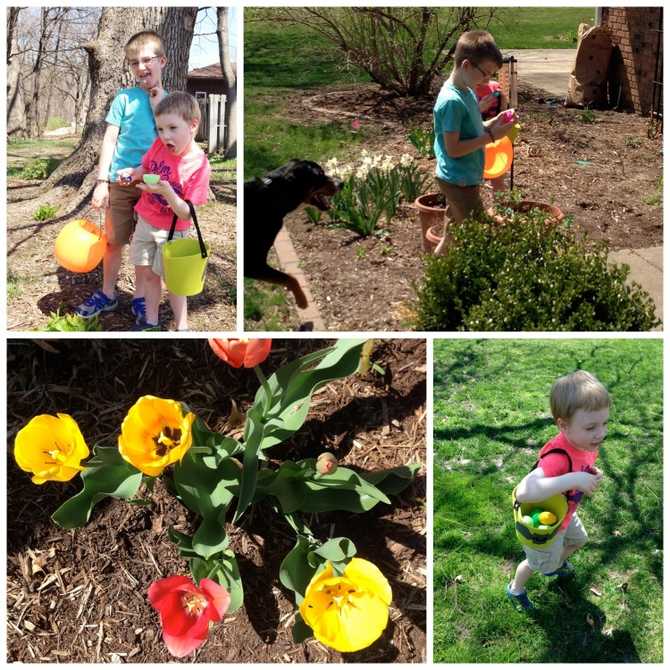 easter, egg hunt, boys, swiss mountain dog, easter egg hunt, tulips