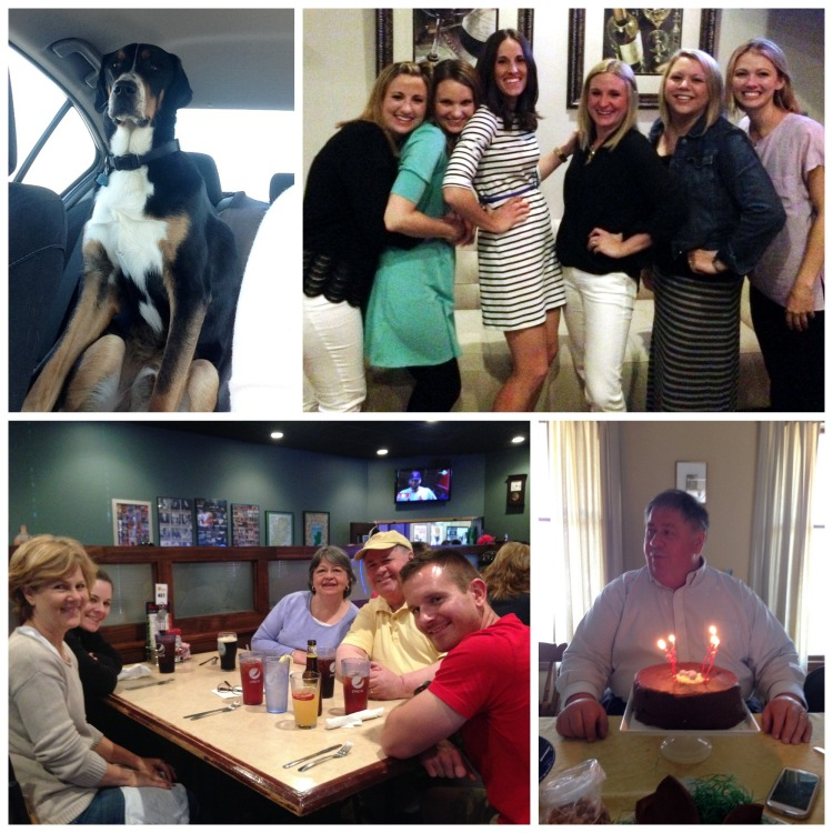 darcy's pint, birthday, cake, going away party, friends, family, greater swiss mountain dog