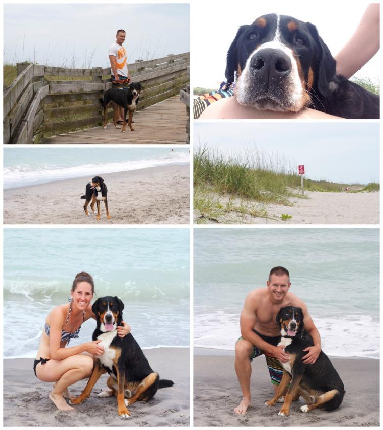venice dog beach, florida, swiss mountain dog, beach day, gulf