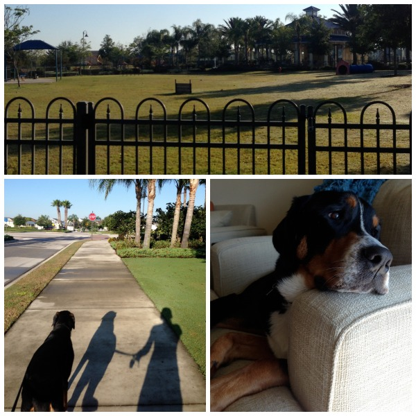 central park, lakewood ranch, dog park, finn, palm trees,