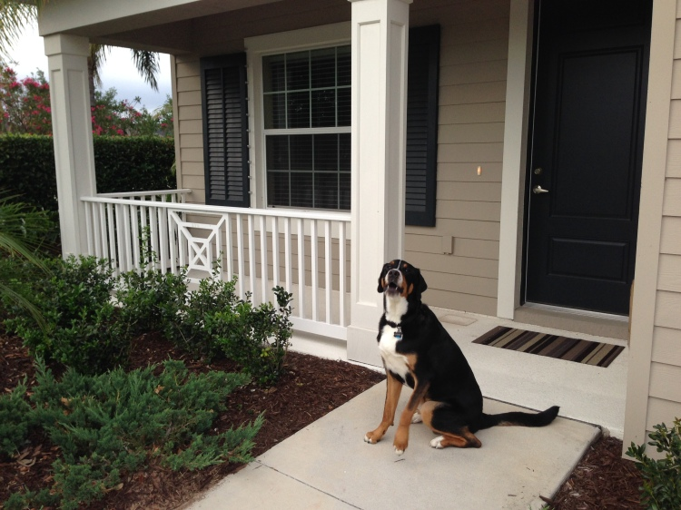 new house, florida, lakewood ranch, sarasota, swiss mountain dog