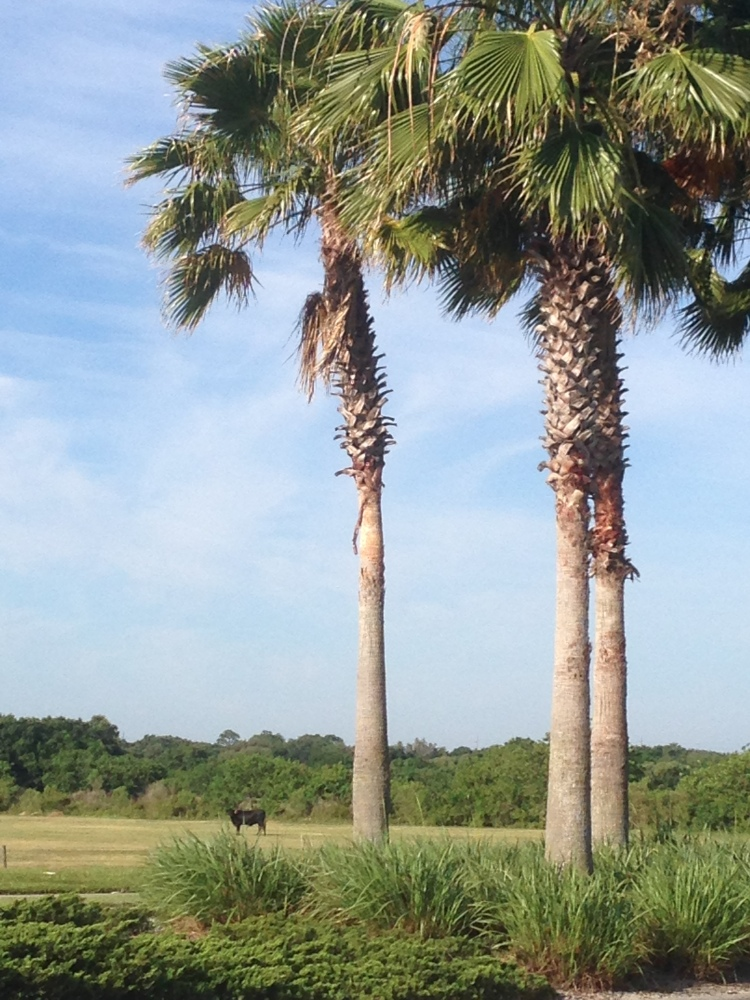 lakewood ranch palm trees, florida weather