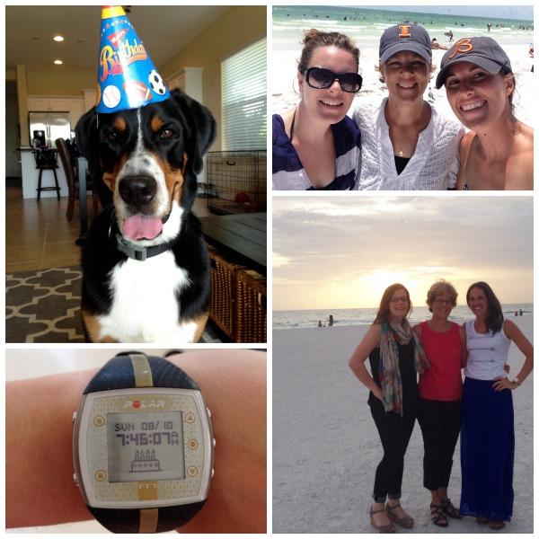 beach, florida, family, birthday, swiss mountain dog, sunset, anna marie island, siesta key