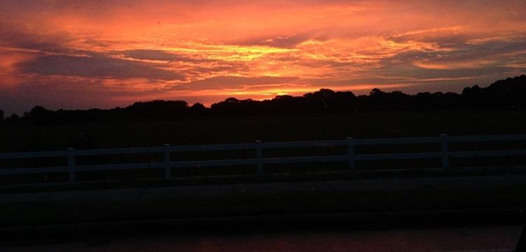 sunset, florida, sky, palm trees