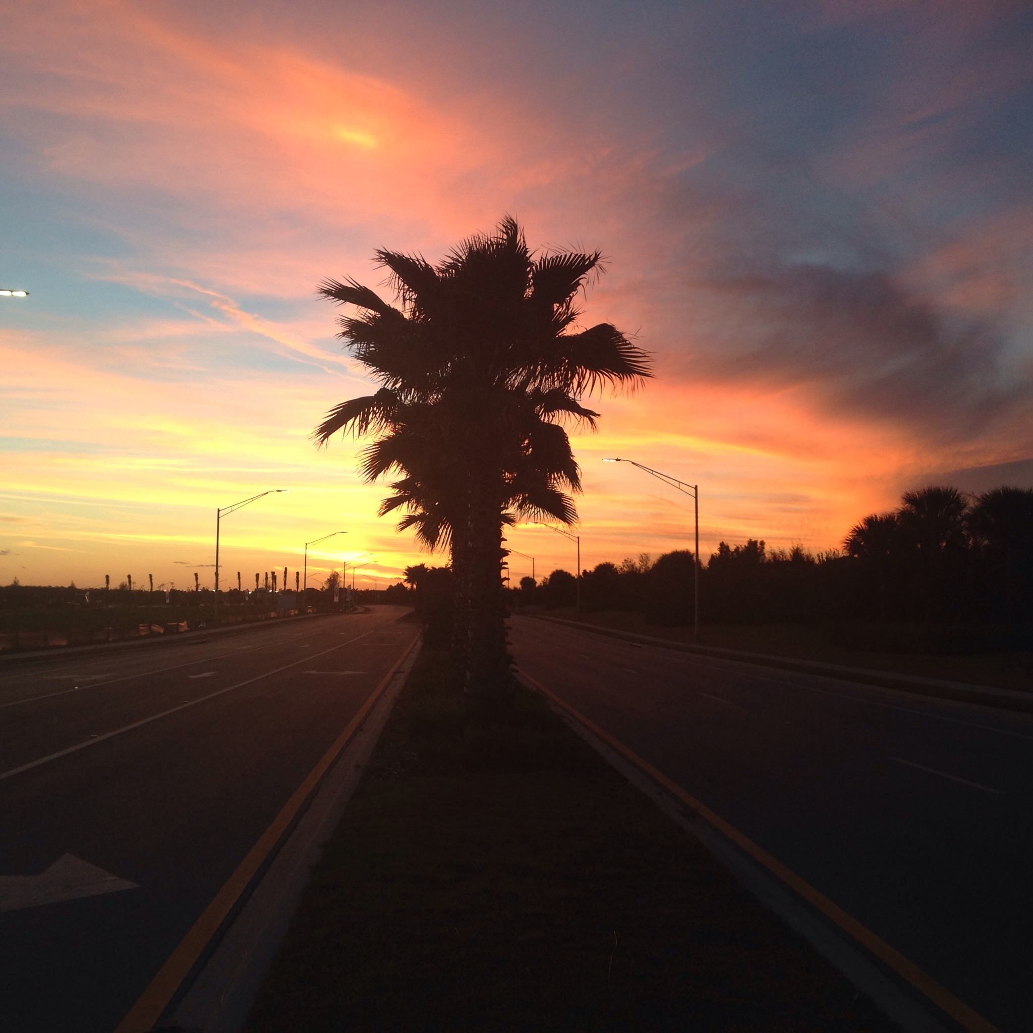 florida sunset, sarasota, florida, winter, sunset, palm trees
