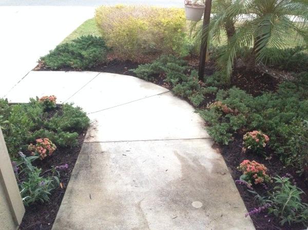 gardening, florida, fire ants, flowers, lowe's