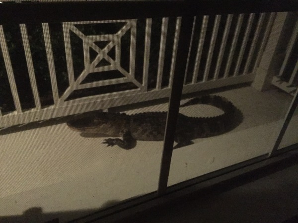 alligator, florida, front porch, lakewood ranch,