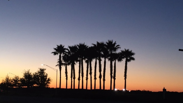 sarasota, florida, palm trees, lakewood ranch,