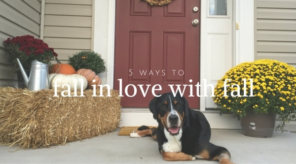 5 ways to fall in love with fall, fall, midwest, st louis, greater swiss mountain dog, swissy, katy trail, st charles, running, pumpkins, halloween recipes, mummy oreos,